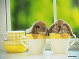 Loveable Little Creatures : Baby Rabbits60 pics